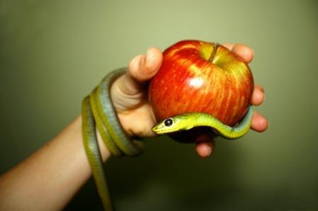 apple_snake